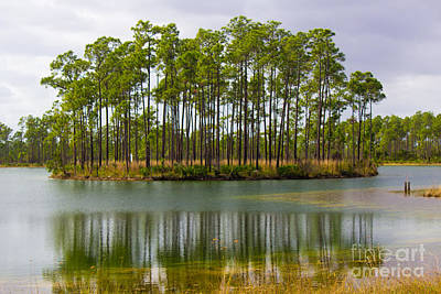 Photograph - Fantasy Island In The Florida Everglades by Rene Triay Photography
