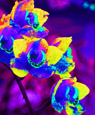 Photograph - Fantasy Orchids 2 by Margaret Saheed