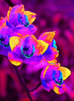 Photograph - Fantasy Orchids by Margaret Saheed