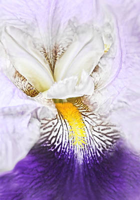 Photograph - Fantasy Purple Iris Flower by Jennie Marie Schell