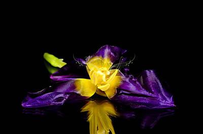 Fantasy Tulip Original by Tommytechno Sweden