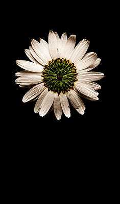 Photograph - Far Side Of The Daisy No Text by Weston Westmoreland