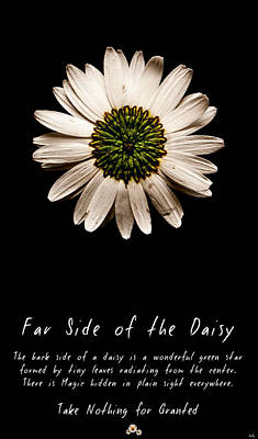 Photograph - Far Side Of The Daisy by Weston Westmoreland