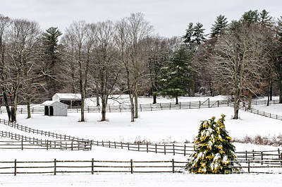 Horse Farm And The Tree Art Print by Mike Ste Marie