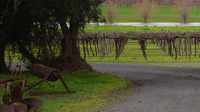 Farm And Vineyard Art Print by Cheryl Miller