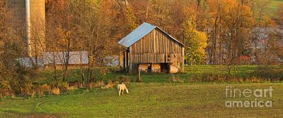 Farm At Sunrise Art Print