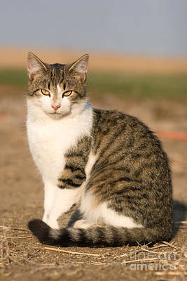 Photograph - Farm Cat by Cindy Singleton