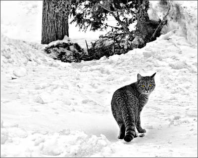 Photograph - Farm Cat by Nikolyn McDonald