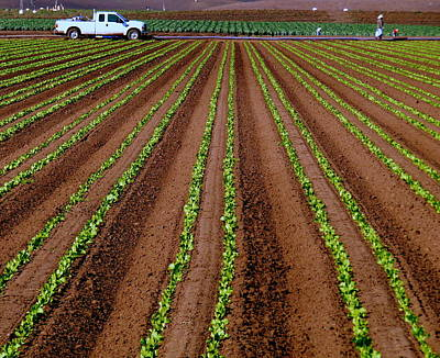 Photograph - Farm Field Sprouting Lettuce by Jeff Lowe