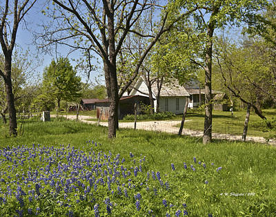 Photograph - Farm House With Bluebonnets by Allen Sheffield