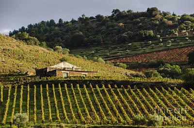 Wine Photograph - Farm House With Vineyard by Oscar Gutierrez
