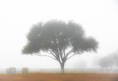 Photograph - Farm On A Foggy Morning by Shey Stitt