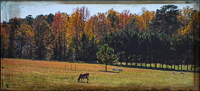 Photograph - Farm Journal - Grazing by Paulette B Wright