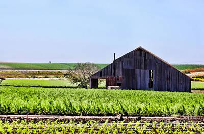 Photograph - Farm Land In Guatalupe By Diana Sainz by Diana Raquel Sainz