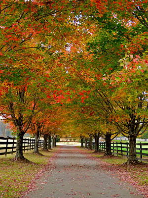 Photograph - Farm Lane In Autumn by Jean Wright