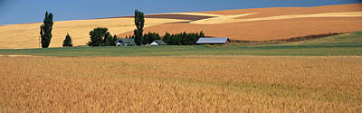 Wheat Field Sky Photograph - Farm, Saint John, Washington State, Usa by Panoramic Images