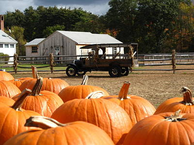 Concord Ma Photograph - Farm Stand Pumpkins by Barbara McDevitt