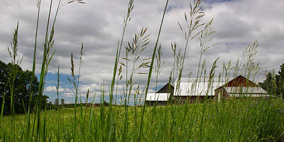 Photograph - Farm Through The Grass by Kirkodd Photography Of New England