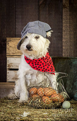 Gathered Dress Photograph - Farmer Dog by Edward Fielding