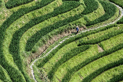 Photograph - Farmer In Rice Terrace by Karen Saunders