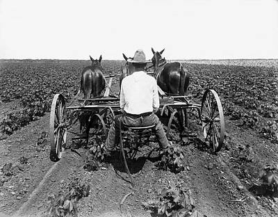 Working Animals Photograph - Farmer With A Mule Drawn Plow by Underwood Archives