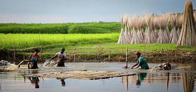 Photograph - Farmers Collecting Jute Fiber by By Shibu Bhattacharjee