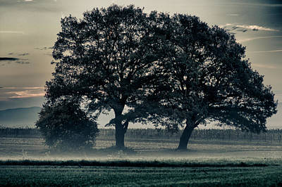 Photograph - Farmers Morning by Miguel Winterpacht