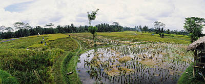 Farmers Working In A Rice Field, Bali Art Print by Panoramic Images