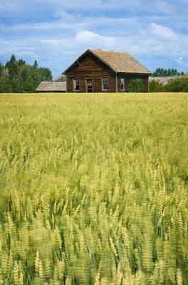 Door Locks And Handles - Farmhouse And Wheat Field, Calmar by Corey Hochachka