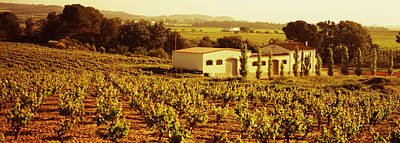 Winemaking Photograph - Farmhouses In A Vineyard, Penedes by Panoramic Images