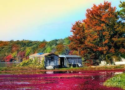 Photograph - Farming Cranberries by Gina Cormier