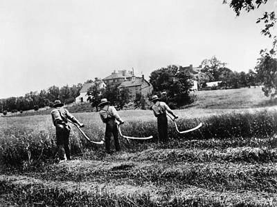 Farming Scythes Art Print