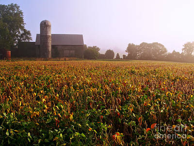 Photograph - Farmland by Olivier Le Queinec