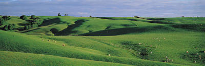 Farmland Southland New Zealand Art Print by Panoramic Images