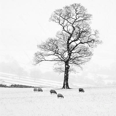Trees In Snow Photograph - Farndale Winter by Janet Burdon