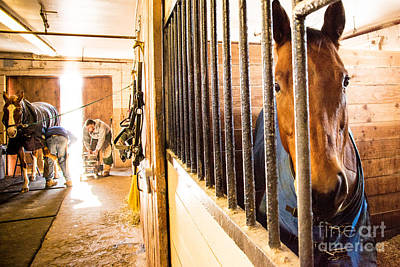 Photograph - Farrier11 by Jim DeLillo