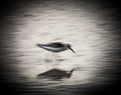 Photograph - Fast In The Ebb And Flow by Christy Usilton