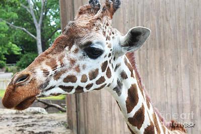 Alyssa Photograph - Fast Walker Giraffe 3 by Alyssa Rogers