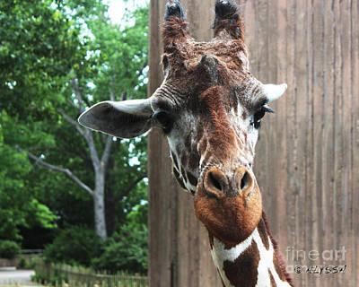 Alyssa Photograph - Fast Walker Giraffe by Alyssa Rogers