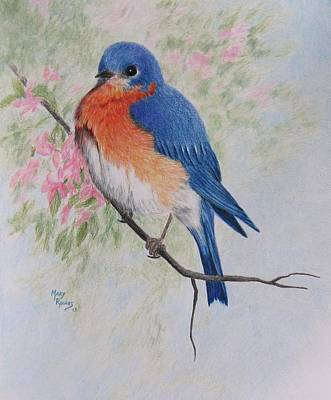 Drawing - Fat And Fluffy Bluebird by Mary Rogers