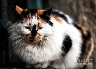 Fat Cat Art Print by John Rizzuto