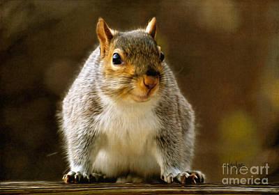 Squirrel Digital Art - Fat 'n Sassy Smile by Lois Bryan