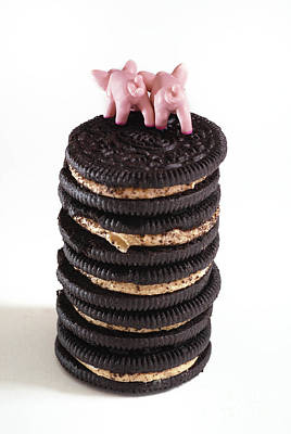 Oreo Photograph - Fat Pigs 5 by Amy Cicconi