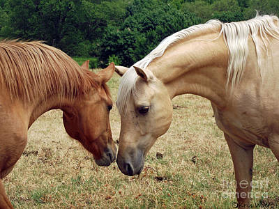 Red Dun Horse Photograph - Father N Daughter by Kris Wolf