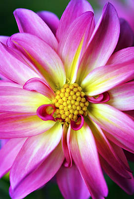 Photograph - Favorite Flower by Marilyn Hunt