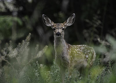 Photograph - Grassy Fawn by Rae Ann  M Garrett
