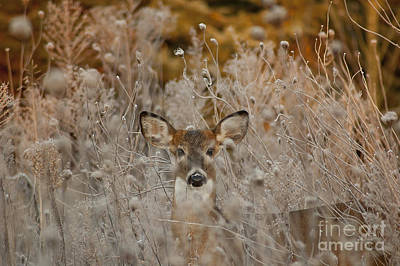 Photograph - Fawn In The Frosty Grass by Wilma  Birdwell