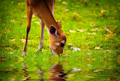 Tranquil Photograph - Fawn  by Modern Art Prints
