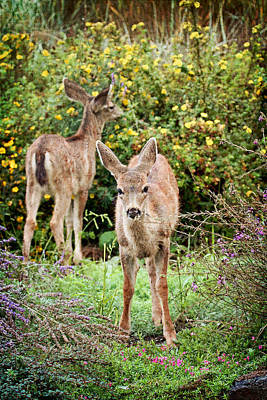 Art Print featuring the photograph Fawns Eating Flowers by Peggy Collins