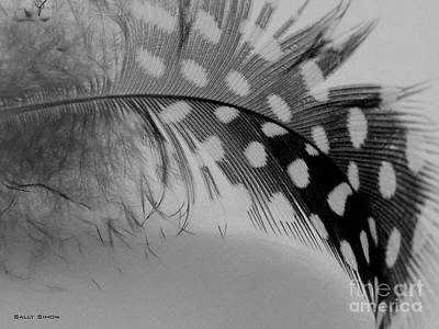 Photograph - Feather 2 by Sally Simon
